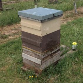 Reading Bees webinar